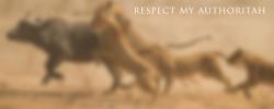 respect my authoritah